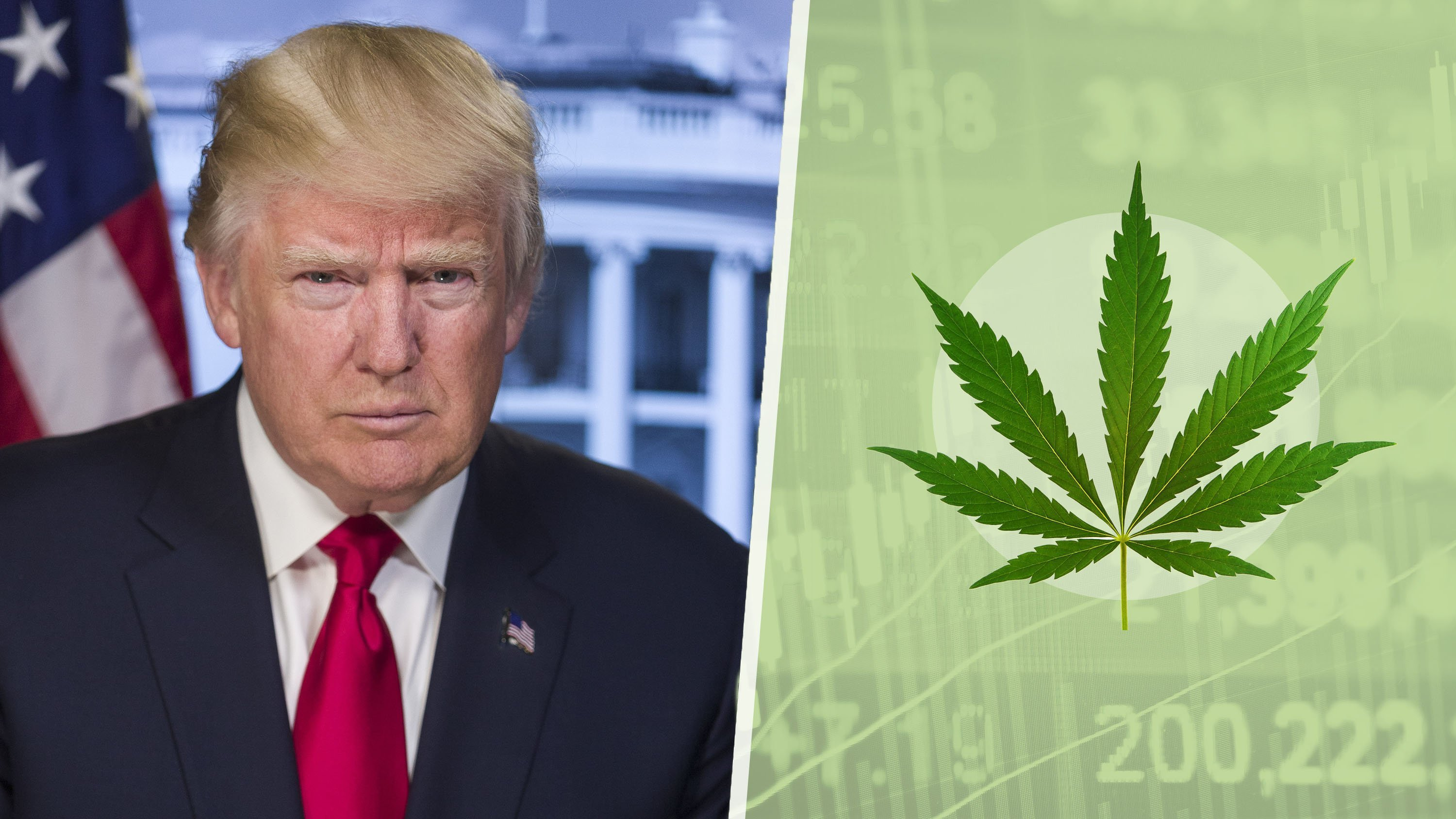 Gov. Chris Christie, head of the presidential commission on opioids, warned of the dangers of marijuana in a letter to President Donald Trump earlier this month about the panel's findings, saying the current push for marijuana legalization could...