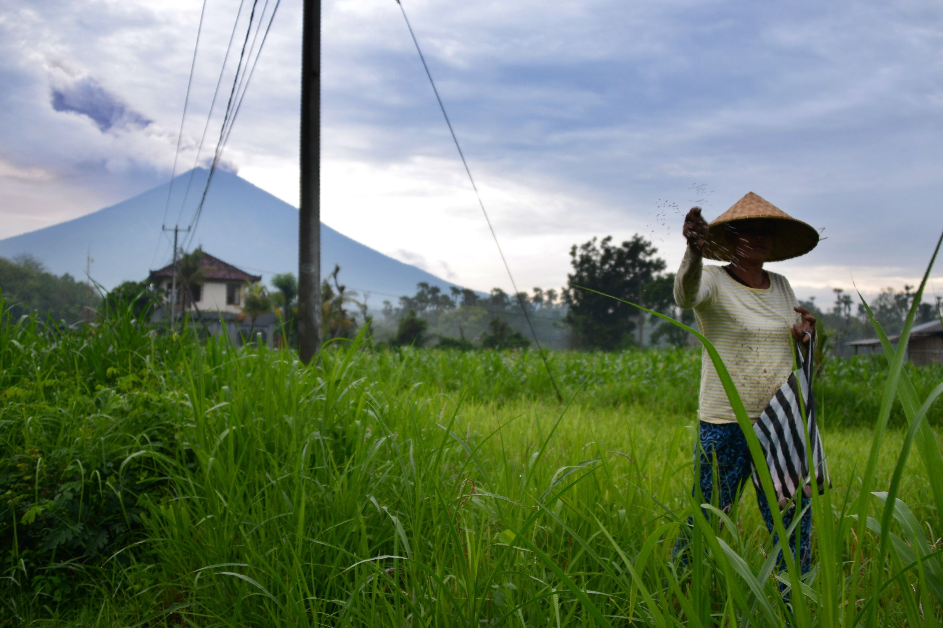 **This image is for use with this specific article only**  A farmer tends to her crops, as the Mount Agung volcano is seen in the background, on November 29.