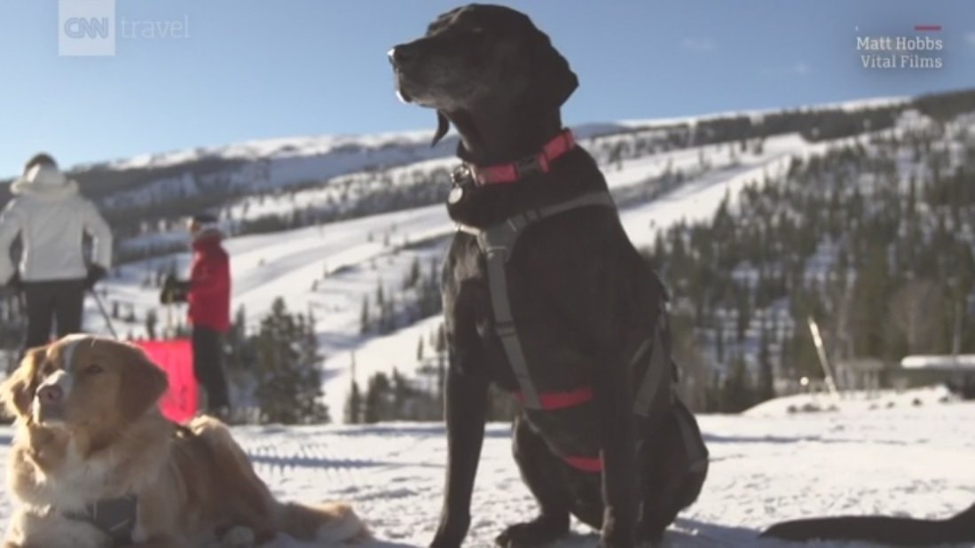 """Teams of skillful ski patrollers are reporting for work on the slopes, including a small but mighty contingent of avalanche dogs (or """"avi dogs,"""" as they're called in ski communities)."""