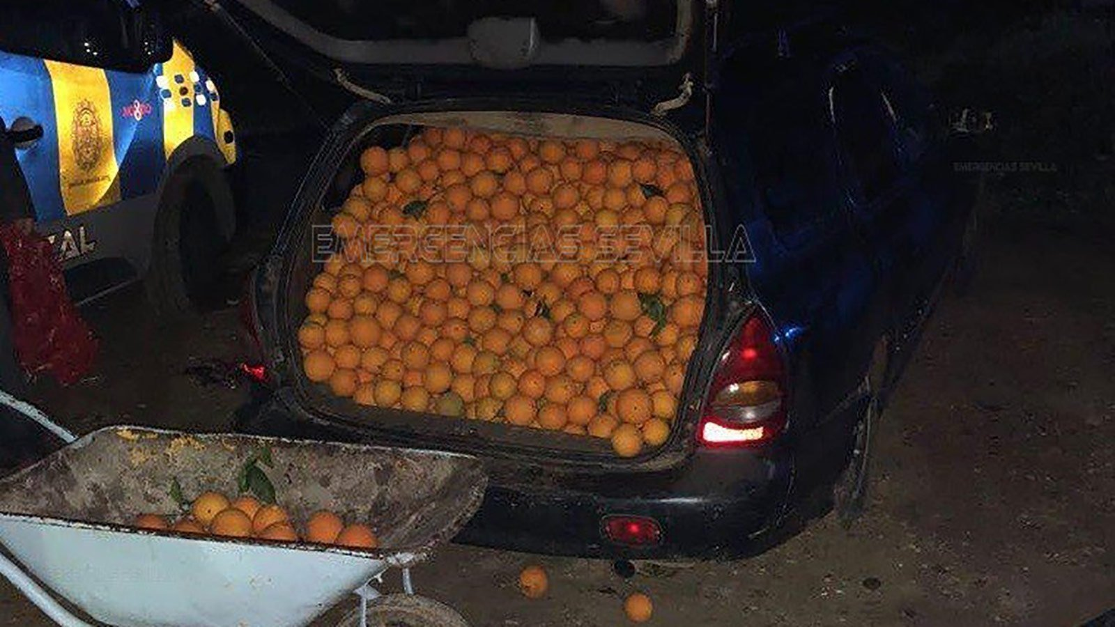 Police put the squeeze on two suspects caught with hundreds of oranges
