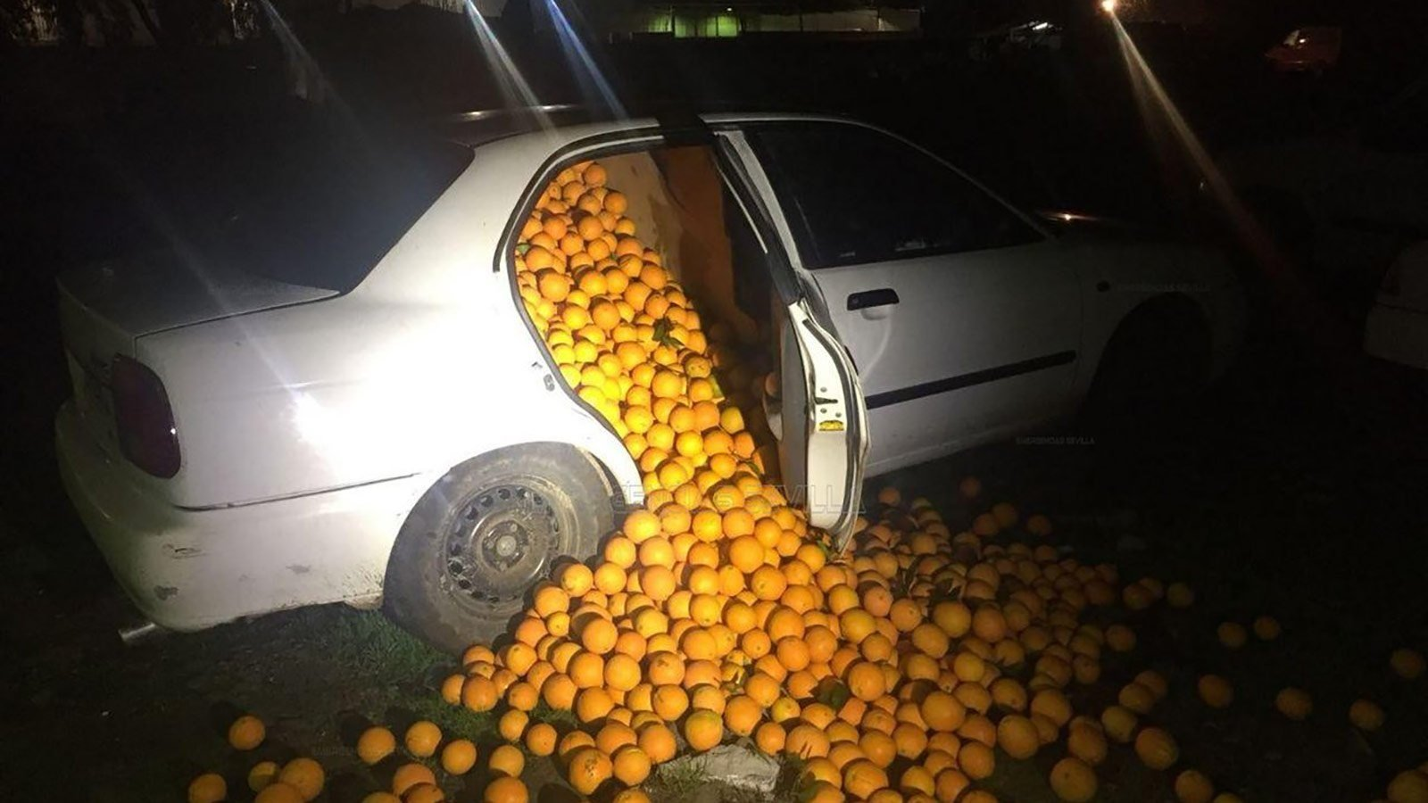 Thieves busted with 9000 pounds of oranges crammed into 3 cars