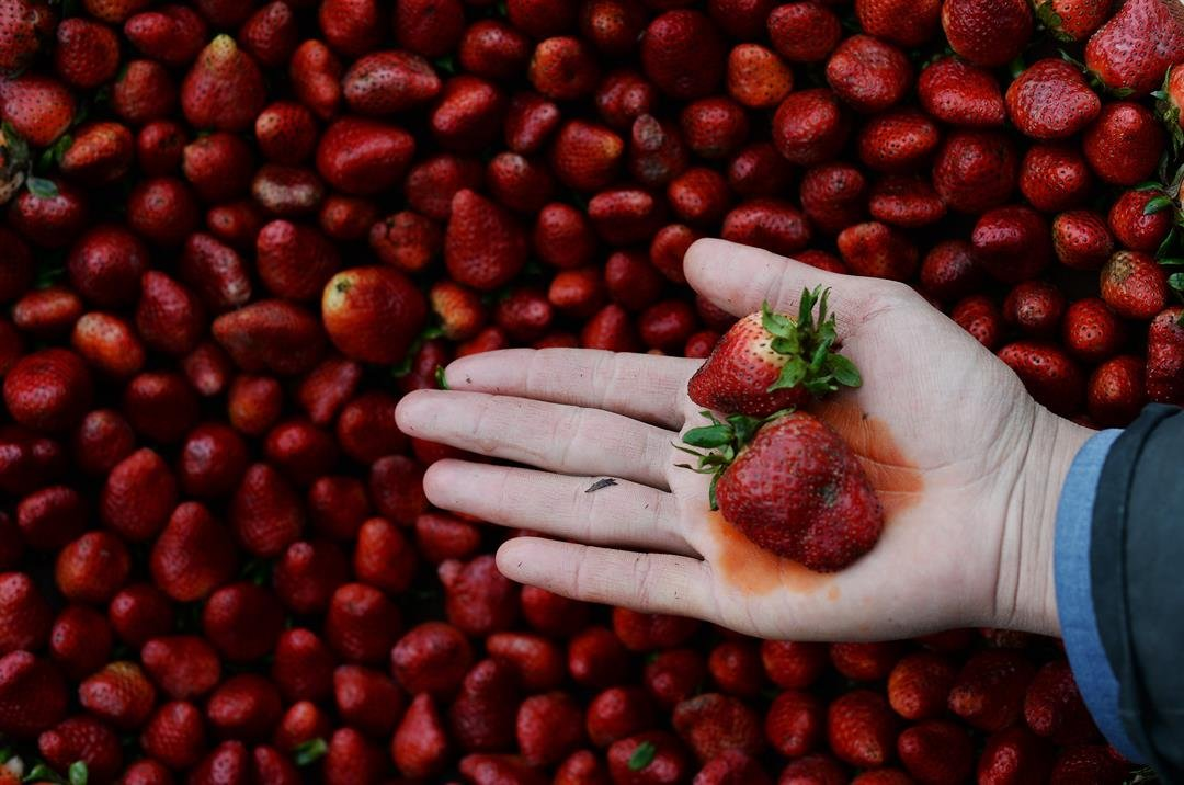Strawberries top 2018's 'Dirty Dozen' fruits and veggies - again