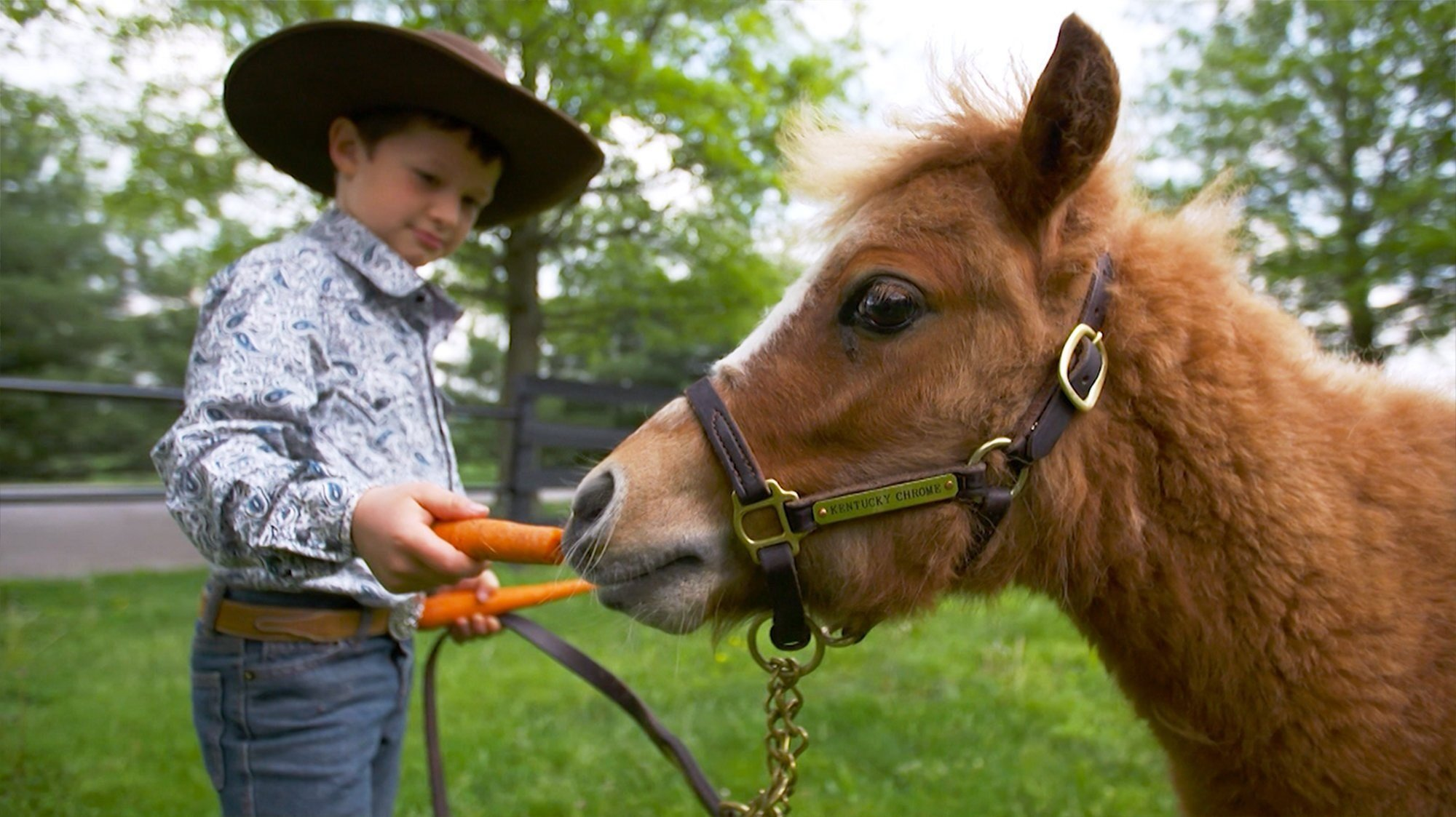 Five-year-old Luke was the first to jump into the pen with 'Tucky'.