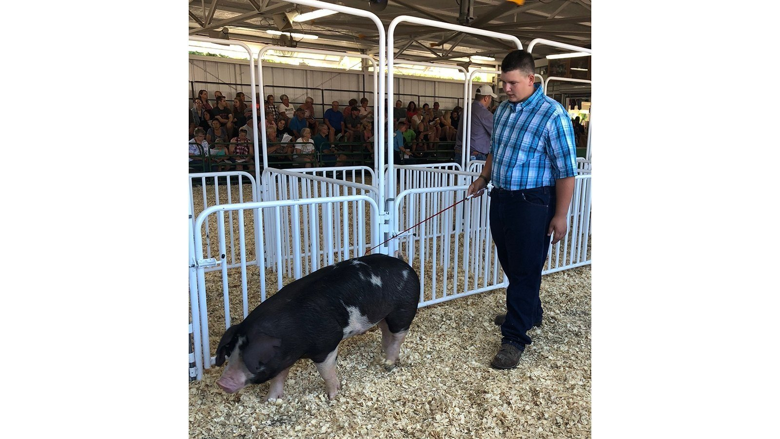 Waylon Klitzman, 15, auctioned his pig Roo to raise money for cancer research.