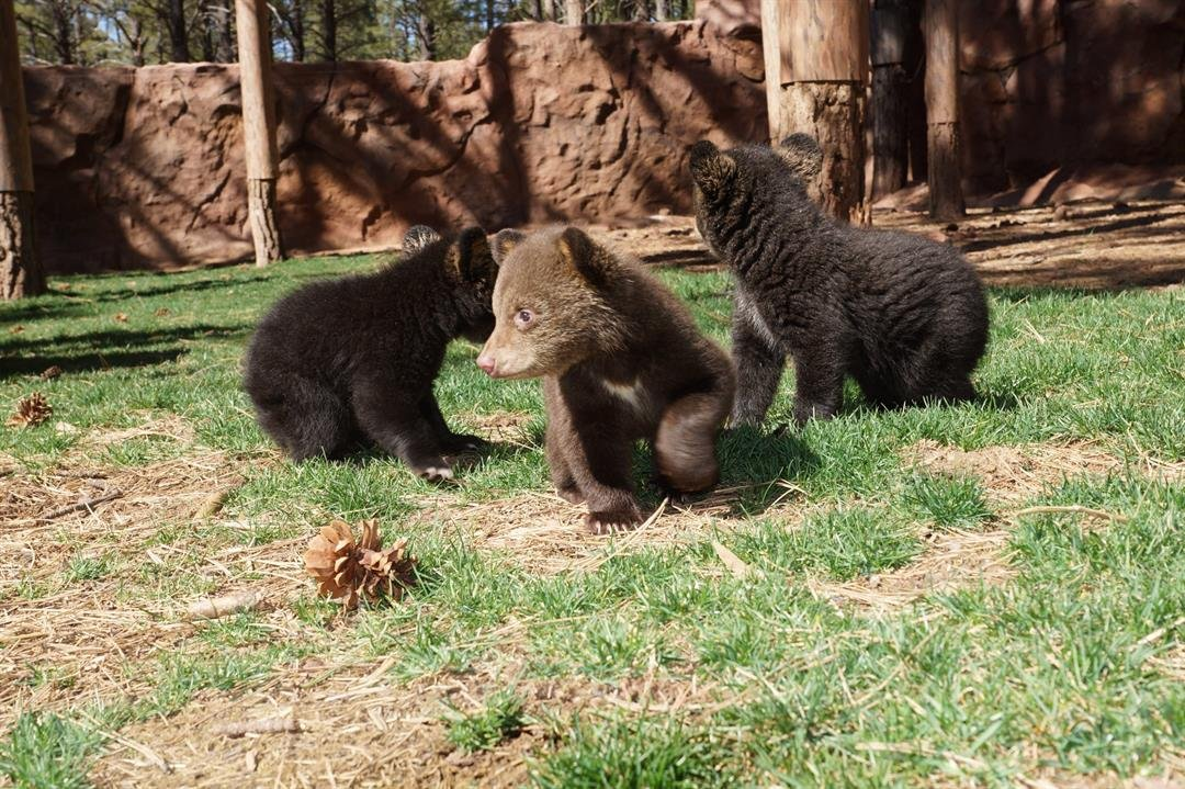 Alaska Wildlife Troopers, which announced the charges on Monday, said the act was caught on a motion-activated camera set up inside the den to monitor the bears as part of a study being conducted by the US Forest Service and the Alaska Department of...