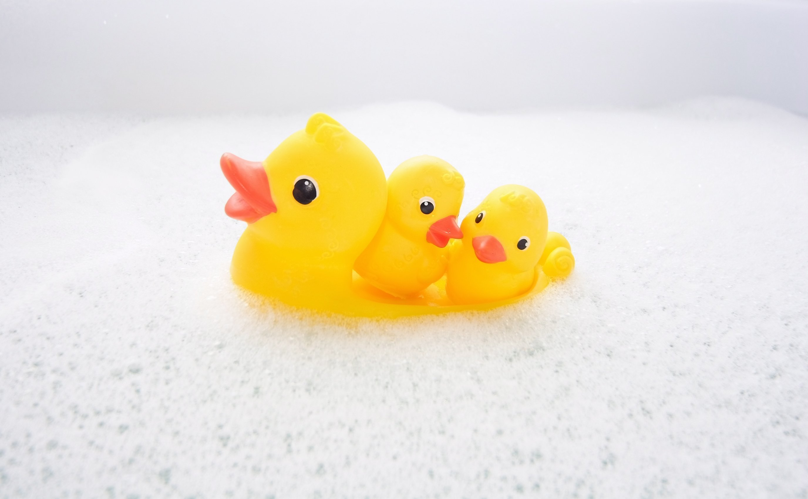 The inside of rubber duckies are full of bacteria. You don\'t see ...