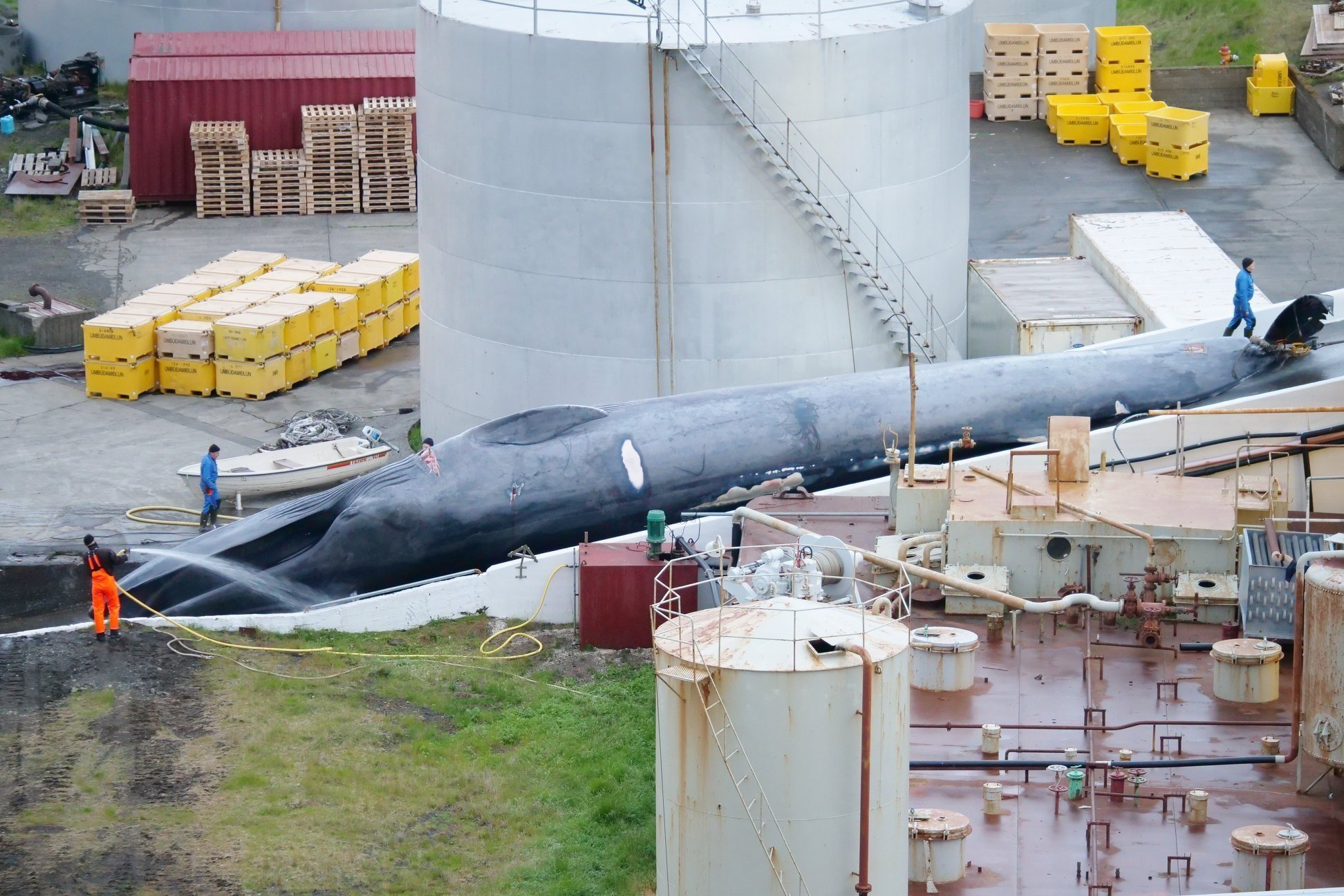 One of Iceland's richest men has hit back against claims his whaling company illegally killed a protected blue whale.